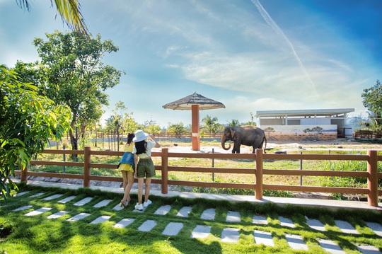 Ghé FLC Zoo Safari xem hổ săn mồi, chơi cùng voi và chuột túi Wallaby - Ảnh 4.