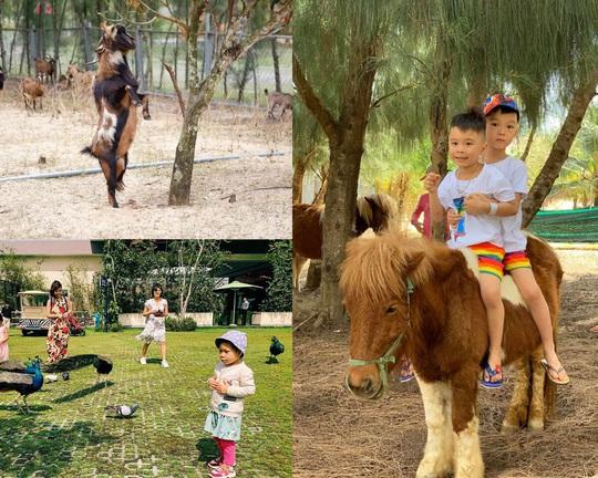 Ghé FLC Zoo Safari xem hổ săn mồi, chơi cùng voi và chuột túi Wallaby - Ảnh 8.