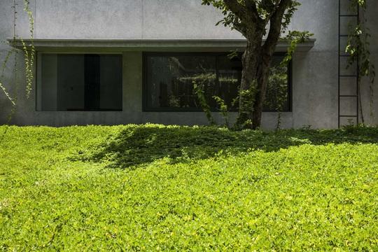 Ngôi nhà trên thảm hoa vàng cỏ xanh - Ảnh 9.