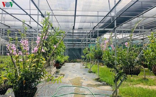 Cơn sốt lan đột biến tiền tỉ tràn về vựa hoa Đông La - Ảnh 1.