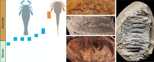 Phát hiện vua bọ cạp to hơn con người, móng vuốt khủng long - Ảnh 1.