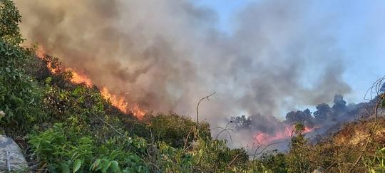 Đốt ong lấy mật làm cháy 3 hecta rừng tự nhiên - Ảnh 1.