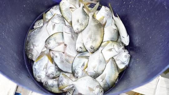 Cá chết bất thường ở sông Chà Và, người nuôi ôm nợ - Ảnh 4.