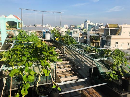 Ông bố nuôi cá và trồng rau trên mái nhà - Ảnh 7.