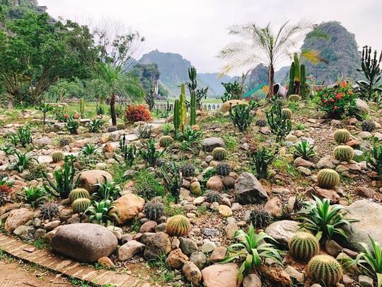 Vườn xương rồng, thác nước tuyệt đẹp dưới chân Hang Múa hút giới trẻ - Ảnh 6.