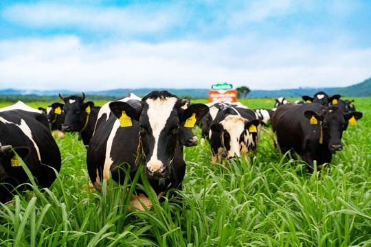 Việt Nam có vùng nguyên liệu sữa đạt chuẩn EU - Ảnh 2.