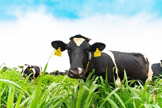 Việt Nam có vùng nguyên liệu sữa đạt chuẩn EU - Ảnh 1.