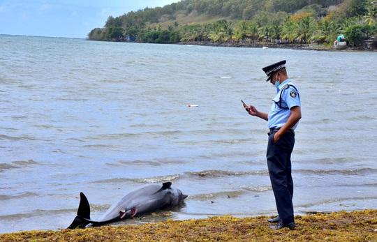 Cá heo mẹ hấp hối vẫn cố cứu con trên vùng biển bị tràn dầu - Ảnh 2.