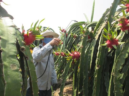 Nông dân giảm sử dụng, đại gia thuốc bảo vệ thực vật hụt thu hơn 50% - Ảnh 1.