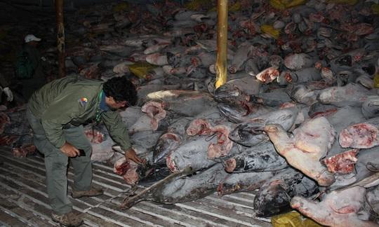 Ecuador tá hỏa vì tàu cá Trung Quốc vơ vét quần đảo Galápagos - Ảnh 1.