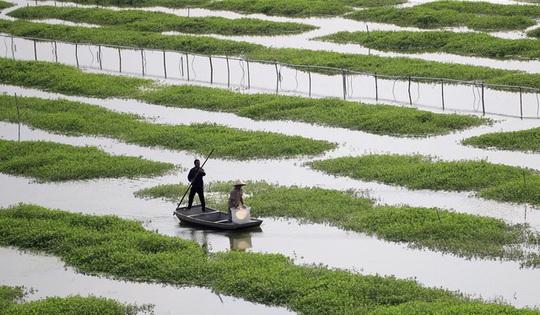 """Nông dân Trung Quốc trả giá đắt khi """"nhường"""" ruộng cho tôm hùm đất - Ảnh 2."""