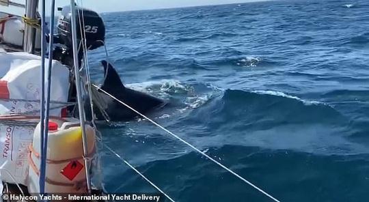 Cá voi sát thủ bao vây, tấn công dữ dội tàu thuyền ở Tây Ban Nha - Ảnh 4.
