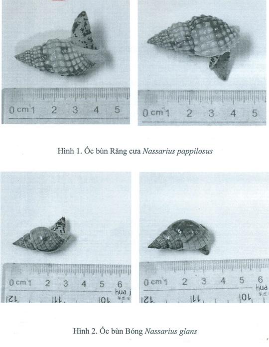 Khánh Hòa: Xác định loại ốc lạ gây ngộ độc khiến 3 người thương vong - Ảnh 3.