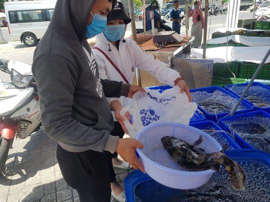 Cả ngàn tấn cá mú bí đầu ra, giá giảm một nửa vẫn khó giải cứu - Ảnh 3.