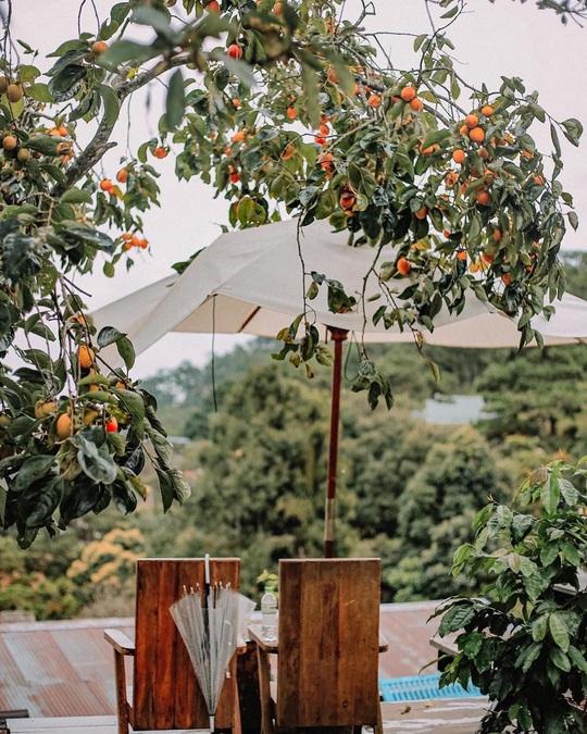 Check-in vườn hồng ở Đà Lạt - Ảnh 10.