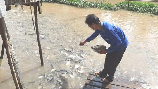 Mặn duyên với đàn cá tự nhiên - Ảnh 1.