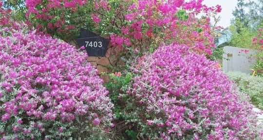 Phát hiện thiên đường sống ảo với background hoa cỏ lãng mạn nhất Quy Nhơn - Ảnh 1.