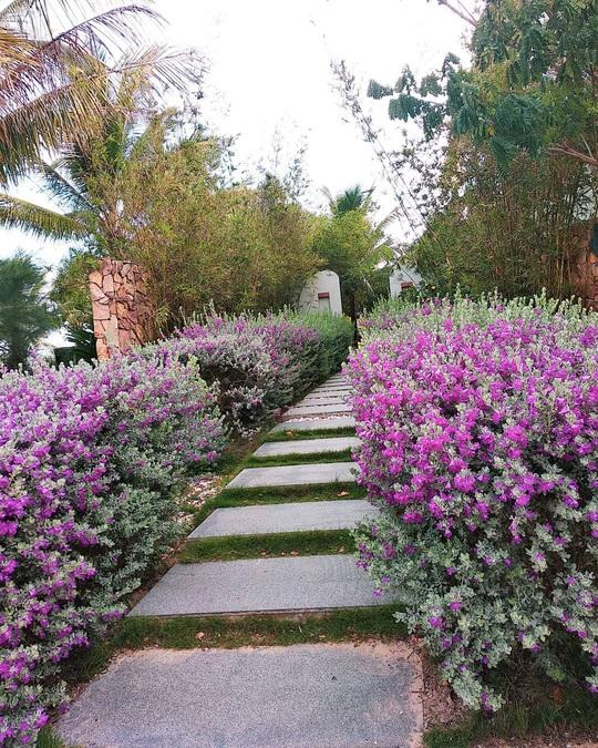 Phát hiện thiên đường sống ảo với background hoa cỏ lãng mạn nhất Quy Nhơn - Ảnh 5.
