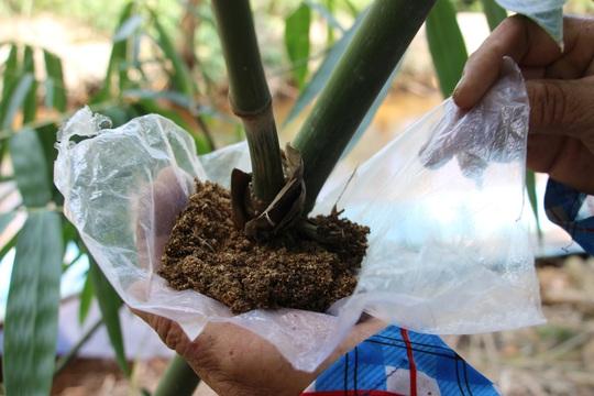 Thu lãi trăm triệu nhờ trồng loại cây bán không bỏ thứ gì - Ảnh 8.