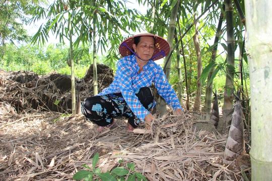 Thu lãi trăm triệu nhờ trồng loại cây bán không bỏ thứ gì - Ảnh 2.