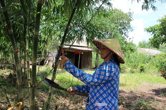 Thu lãi trăm triệu nhờ trồng loại cây bán không bỏ thứ gì - Ảnh 3.