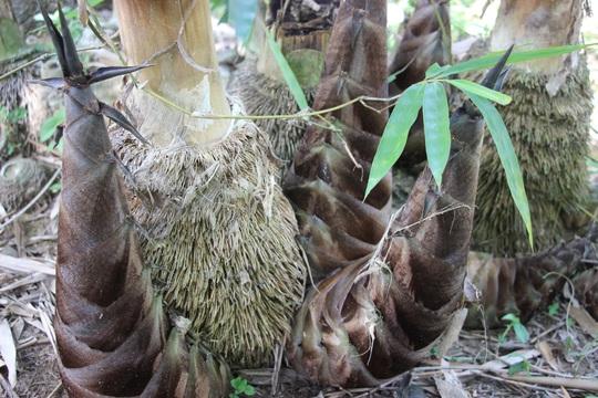Thu lãi trăm triệu nhờ trồng loại cây bán không bỏ thứ gì - Ảnh 7.
