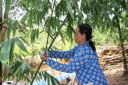 Thu lãi trăm triệu nhờ trồng loại cây bán không bỏ thứ gì - Ảnh 9.