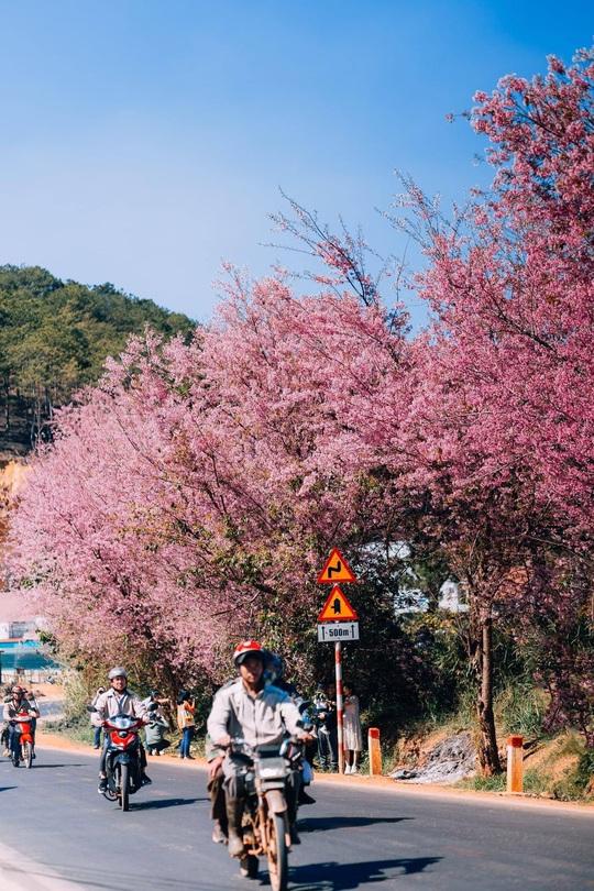 Nơi ngắm hoa xuân ở Đà Lạt - Ảnh 4.