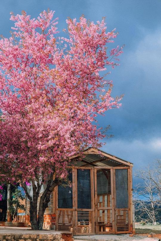 Nơi ngắm hoa xuân ở Đà Lạt - Ảnh 2.