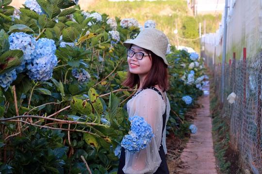 Nơi ngắm hoa xuân ở Đà Lạt - Ảnh 6.