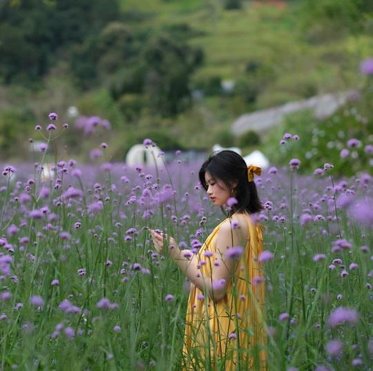 Nơi ngắm hoa xuân ở Đà Lạt - Ảnh 7.