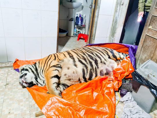 Phát hiện con hổ lớn nặng khoảng 250 kg trong nhà dân - Ảnh 1.