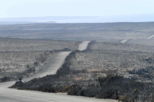 Phép màu từ trong thảm cảnh cháy rừng ở Úc - Ảnh 5.