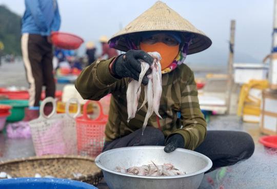 Loài cá làm thức ăn cho heo thành đặc sản ngày lạnh, ngư dân trúng đậm đầu năm - Ảnh 8.
