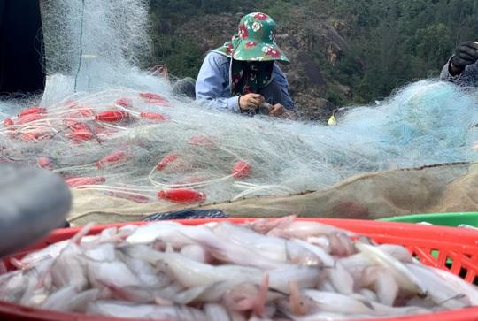 Loài cá làm thức ăn cho heo thành đặc sản ngày lạnh, ngư dân trúng đậm đầu năm - Ảnh 5.