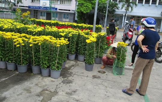 Hoa Tết còn ê hề, Sở Công Thương TP HCM kêu gọi dân giải cứu - Ảnh 5.