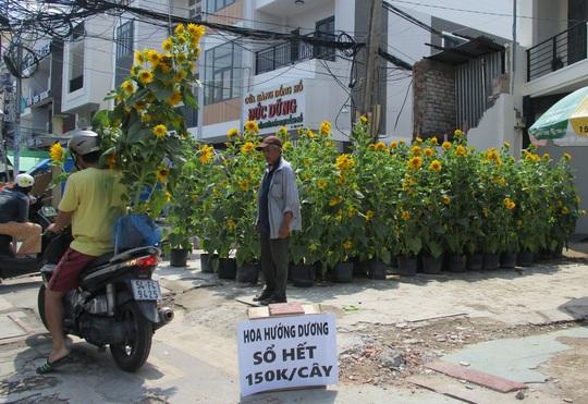 Hoa Tết còn ê hề, Sở Công Thương TP HCM kêu gọi dân giải cứu - Ảnh 10.