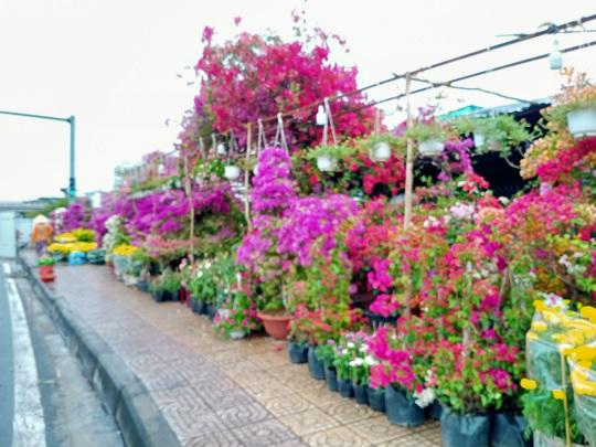 Cần Thơ bàn giải pháp hỗ trợ người bán hoa kiểng - Ảnh 5.