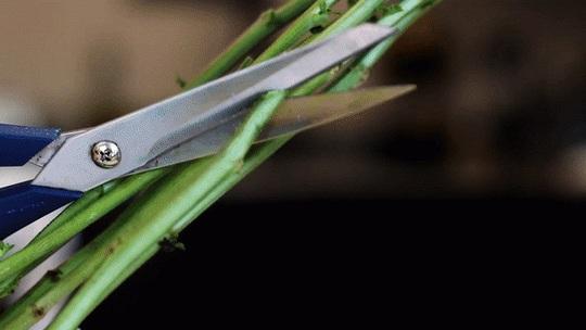 Học bí kíp giữ hoa tươi lâu trong ngày Tết - Ảnh 2.
