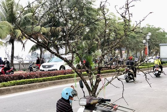 Người Hà Nội chi tiền triệu mua cành lê chơi sau Tết - Ảnh 3.