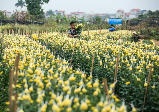 CLIP: Thị trường hoa Tết Tân Sửu 2021 ở Thủ đô đìu hiu vì dịch Covid-19 - Ảnh 4.
