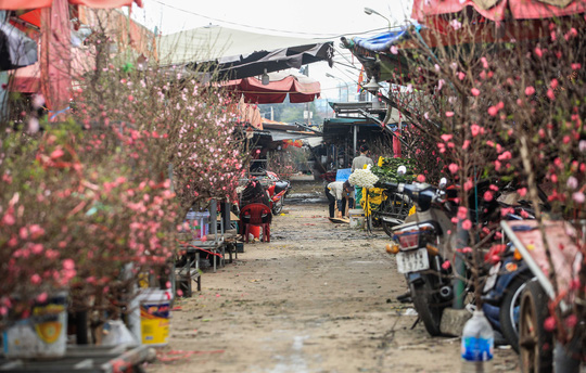 CLIP: Thị trường hoa Tết Tân Sửu 2021 ở Thủ đô đìu hiu vì dịch Covid-19 - Ảnh 13.