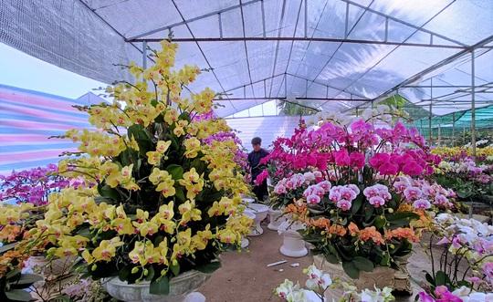 Hoa lan Trung Quốc tràn ngập, đắt đỏ ngang ngửa lan Đà Lạt - Ảnh 2.