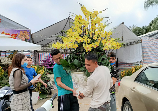 Hoa lan Trung Quốc tràn ngập, đắt đỏ ngang ngửa lan Đà Lạt - Ảnh 12.