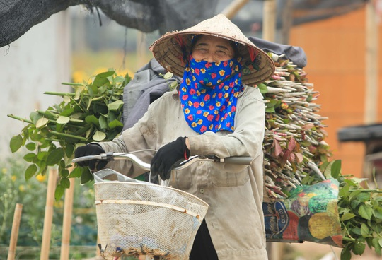 """CLIP: Ruộng hoa khô héo vì không bán được, dân trồng hoa """"gạt nước mắt cắt bỏ - Ảnh 16."""