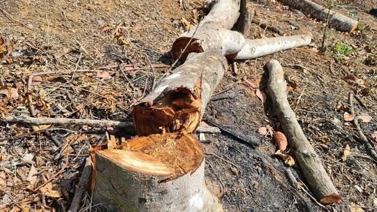 Lâm Đồng tái xuất tình trạng phá rừng phòng hộ, lấn chiếm đất - Ảnh 5.