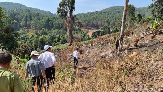 Lâm Đồng tái xuất tình trạng phá rừng phòng hộ, lấn chiếm đất - Ảnh 4.