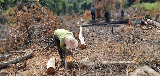 Lâm Đồng tái xuất tình trạng phá rừng phòng hộ, lấn chiếm đất - Ảnh 1.