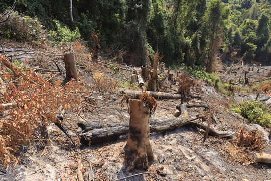 Lâm Đồng tái xuất tình trạng phá rừng phòng hộ, lấn chiếm đất - Ảnh 7.