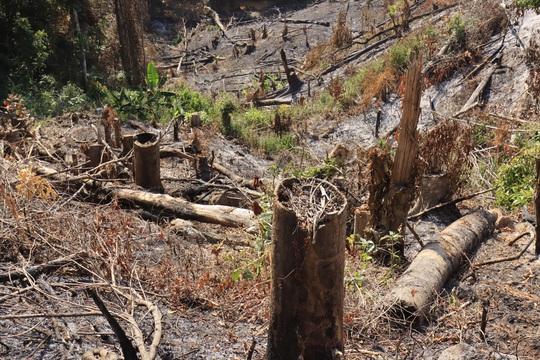 Lâm Đồng tái xuất tình trạng phá rừng phòng hộ, lấn chiếm đất - Ảnh 8.